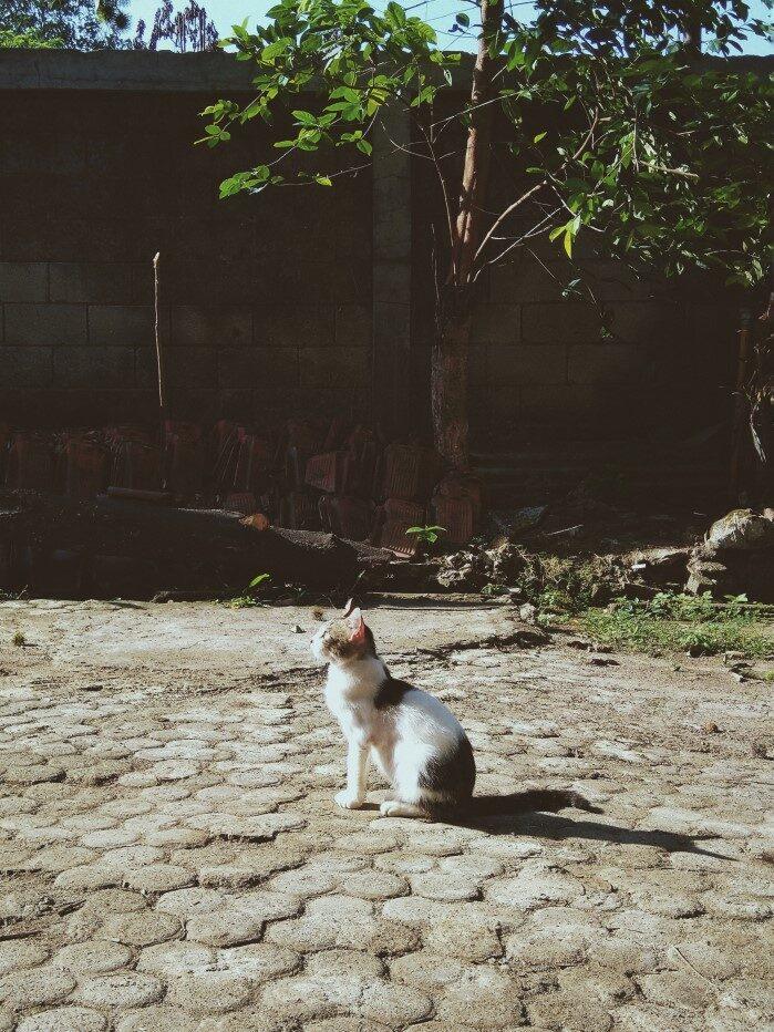 Harapan Kucing