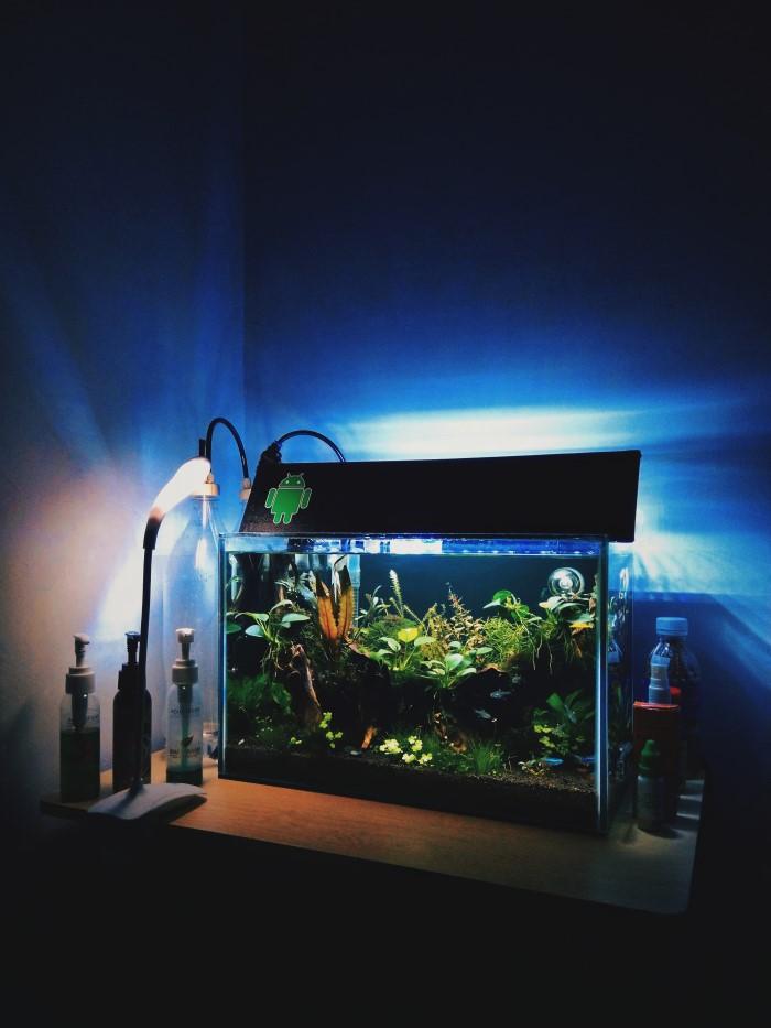 Rawa Tanduk Aquascape